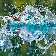2019 WESSA Hunt Test | A Handlers Water | 9/01/2019