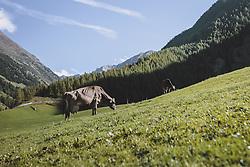 THEMENBILD, eine Kuh grast auf einer Wiese vor einer Bergkulisse, aufgenommen am 02. Oktober 2021, Niederthai, Österreich // a cow grazes in a meadow in front of mountains, on 2021/10/02, Niederthai, Austria. EXPA Pictures © 2021, PhotoCredit: EXPA/Stefanie Oberhauser