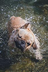 THEMENBILD - ein Hund kühlt sich im Wasser ab, aufgenommen am 28. Juli 2020 in Zell am See, Österreich // a dog cools down in water, Zell am See, Austria on 2020/07/28. EXPA Pictures © 2020, PhotoCredit: EXPA/ JFK