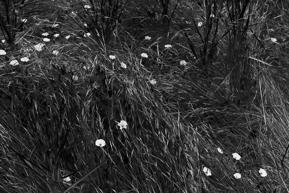 Flowers. Santa Cruz Island. Channel Islands National Park. California.