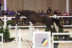 018 - Moneymaker van t Meulenhof<br /> Hengstenkeuring BWP - Azelhof - Koningshooikt 2015<br /> ©  Dirk Caremans