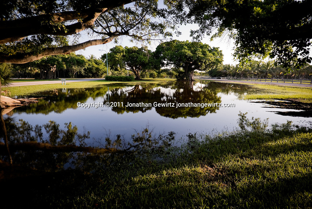 A view of banyan fig trees reflected in pools of rain water at Crandon Park, Key Biscayne, Florida. WATERMARKS WILL NOT APPEAR ON PRINTS OR LICENSED IMAGES.