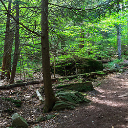 Benton, PA, USA - June 15, 2013: Trail in Pennsylvania's Ricketts Glen State Park.