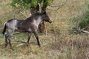 Wildlife Photographs of Wild Horses and Buffalo