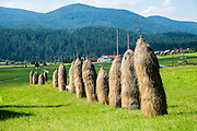 Traditional bale of grass in the meadow. Podcerkev, Slovenia