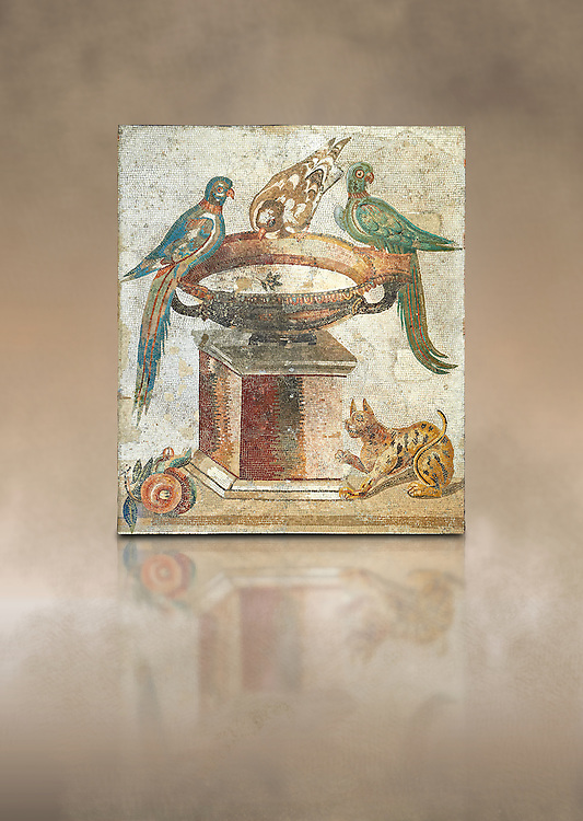 Roman mosaic of drinking birds from Santa Maria Capua Vetere, ancient Capua, inv no 9992, Naples Archaeological Musum, Italy ..<br /> <br /> If you prefer to buy from our ALAMY PHOTO LIBRARY  Collection visit : https://www.alamy.com/portfolio/paul-williams-funkystock - Scroll down and type - Roman Mosaic Naples - into LOWER search box. {TIP - Refine search by adding a background colour as well}.<br /> <br /> Visit our ROMAN ART & HISTORIC SITES PHOTO COLLECTIONS for more photos to download or buy as wall art prints https://funkystock.photoshelter.com/gallery-collection/The-Romans-Art-Artefacts-Antiquities-Historic-Sites-Pictures-Images/C0000r2uLJJo9_s0