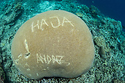 Vandalism graffitti<br /> Raja Ampat<br /> Coral triangle<br /> Indonesia<br /> Names carved on coral head