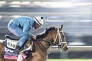 November 1-3, 2018: Breeders' Cup Horse Racing World Championships. Pakhet