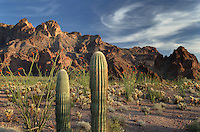 Kofa Mountains Wildlife Refuge Arizona