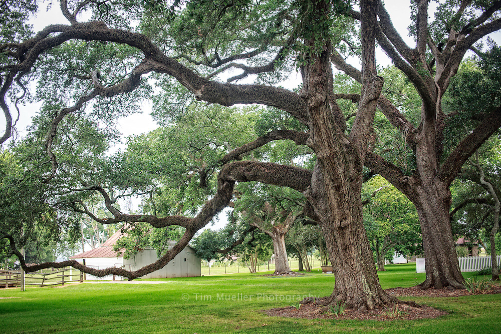 The Oakland Plantation is part of the Cane River National Heritage Area located near the town of Natchitoches, Louisiana. The heritage area is known for its historic plantations, distinctive Creole architecture, and its multi-cultural legacy.