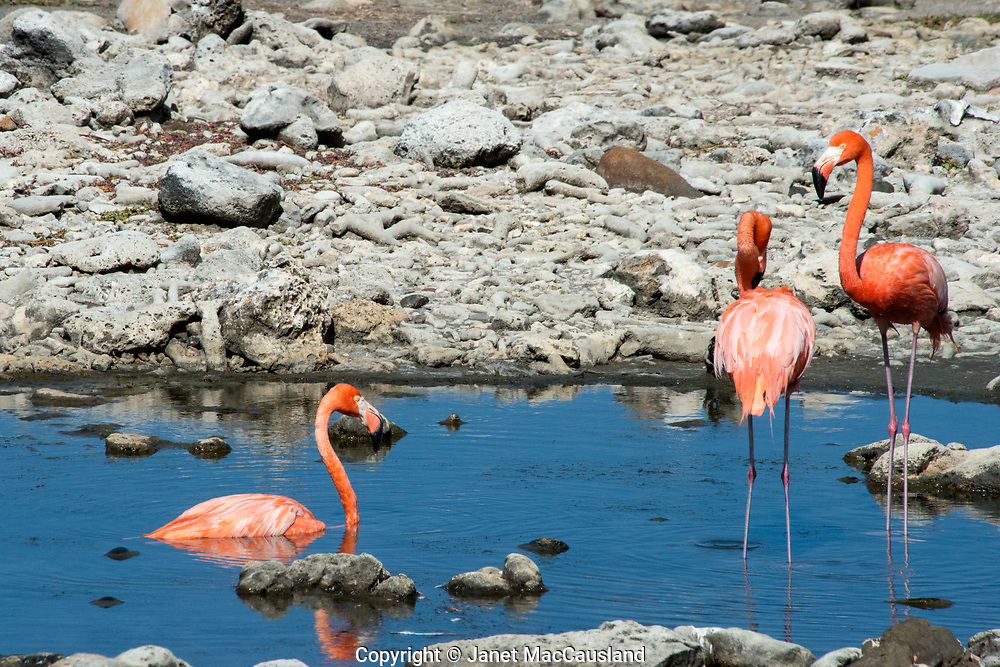 Washington Slagbaai National Park, Bonaire, Netherland Antilles,