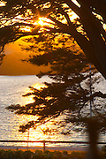 A view at sunset through the trees over the bay towards the island St Pierre des Embiez, sun shining through the tree branches Clos des Iles Le Brusc Six Fours Cote d'Azur Var France