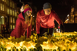 Marie Curie celebrates its Great Daffodil Appeal with an installation of 2,100 handmade daffodils called Garden of Light in Edinburgh's St Andrew Square.<br /> <br /> Pictured; Ula Trochimiak and Richard Meade, Marie Curie employees inspecting the completed installation