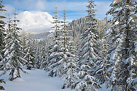 A break in the forest yields a view of Mount Rainier - Puyallup Ridge Trail - Mount Tahoma Trails, WA, USA