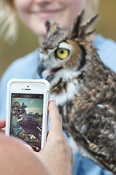 People photographic great horned owl at Raptor Show by Last Chance Forever rehabilitation center, Mitchell Lake Audubon Center, San Antonio, Texas, USA.