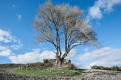 Foggia Monti Dauni nei pressi di Biccari (Foggia).<br /> Vecchia casetta in disuso.<br /> <br /> Il Subappennino Dauno (noto anche con i toponimi Monti Dauni o Monti della Daunia, la mundàgne o u Appenníne in foggiano) è una catena montuosa che costituisce il prolungamento orientale dell'Appennino sannita. Essa occupa la parte occidentale della Capitanata e corre lungo il confine della Puglia con il Molise e la Campania.