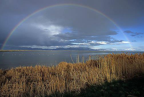 Bear River National Wildlife Refuge. Utah.