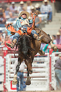Bareback rider Tyler Waltz hangs on to Nine Tails at the Cheyenne Frontier Days rodeo at Frontier Park Arena July 24, 2015 in Cheyenne, Wyoming. Frontier Days celebrates the cowboy traditions of the west with a rodeo, parade and fair.