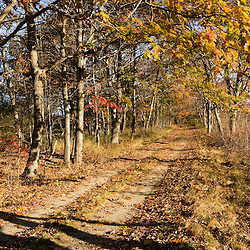An old woods road in Biddeford, Maine.  Timber Point.