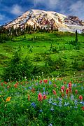 Wildflower meadow at Paradise, Mount Rainier national park, Washington, USA