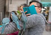 Photographing parakeets at Bird Garden (Yuen Po Street), Kowloon, Hong Kong, China.
