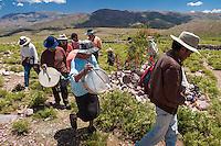 TOCANDO COPLAS EN UNA APACHETA DURANTE EL CARNAVAL, JUIRI, QUEBRADA DE HUMAHUACA, PROV. DE JUJUY, ARGENTINA