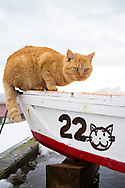 """Tashirojima kallas för """"kattön"""" eftersom här lever hundratals katter tillsammans med ca 50 personer.   <br /> Ishinomaki, Miyagi Prefecture, Japan. <br /> Fotograf: Christina Sjögren<br /> Copyright 2018, All Rights Reserved"""