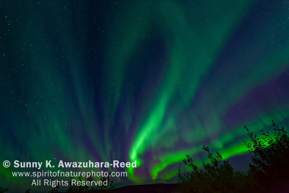 Bright aurora dancing above Taylor Highway, Interior Alaska, Autumn.