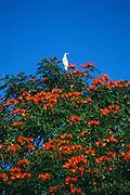 A bird suns himself in a tree near the Arecibo Observatory in Arecibo, Puerto Rico.