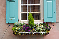66512-00205 Window box with pansies, snapdragons, and ivy on house with turquoise shutters. Charleston, SC