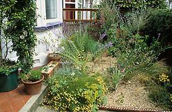 The small, gravelled front garden with Perovskia atriplicifolia, Verbena bonariensis and Passiflora caerulea (Passion flower)