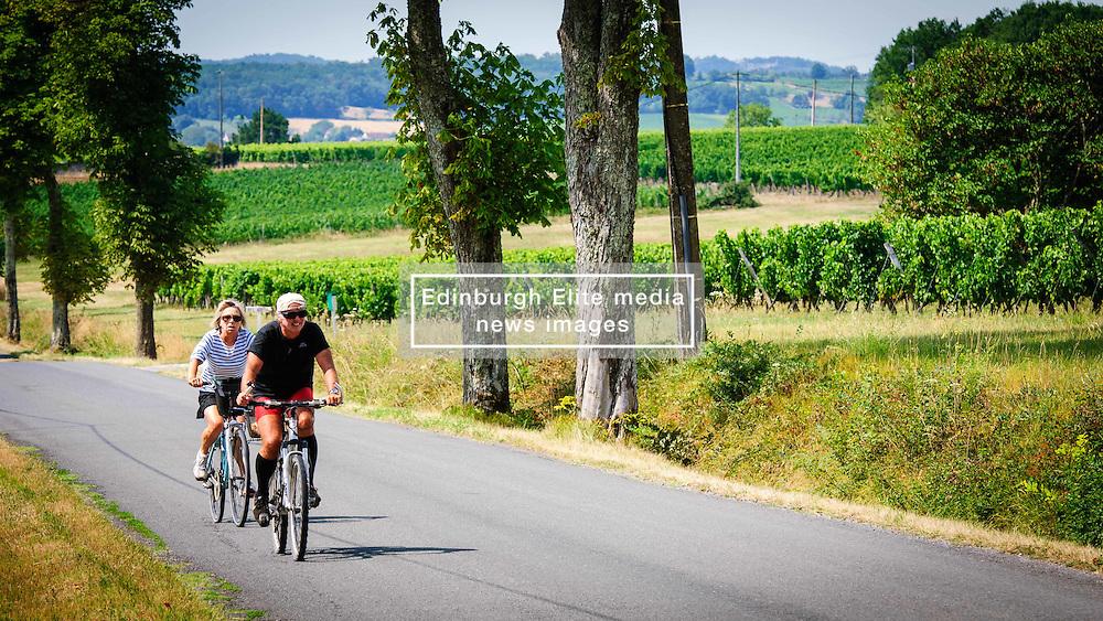 Tourists cycling past vineyards in the Dordogne, France in summer<br /> <br /> (c) Andrew Wilson   Edinburgh Elite media