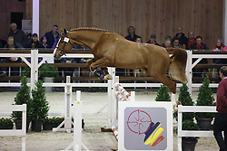 020 - Mayo van de Herkkant<br /> Hengstenkeuring BWP - Azelhof - Koningshooikt 2015<br /> ©  Dirk Caremans