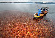 HANGZHOU, CHINA - NOVEMBER 25: (CHINA OUT) <br /> <br /> Colorful Fallen Leaves Decorate West Lake<br /> <br /> A sanitation worker get the fallen leaves out of water on the West Lake on November 25, 2015 in Hangzhou, Zhejiang Province of China. Cold air hit East China leaving a sudden drop in temperature this week. ©Exclusivepix Media