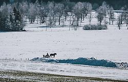 THEMENBILD - eine Pferdekutsche auf einer mit Schnee bedeckten Wiese, vor einem kleinen Wald , aufgenommen am 21. Jänner 2020 in Kaprun, Oesterreich // a horse-drawn carriage on a meadow covered with snow, in front of a small forest in Kaprun, Austria on 2020/01/21d. EXPA Pictures © 2020, PhotoCredit: EXPA/Stefanie Oberhauser