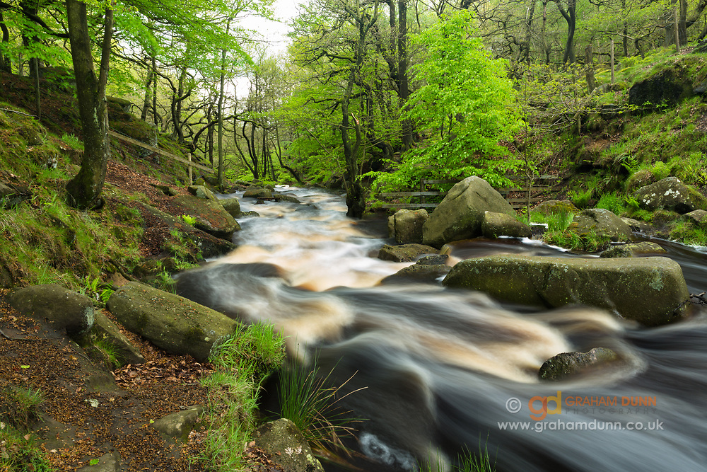 A full Burbage Brook cascades down a verdant Padley Gorge in the Peak District. A 4 second exposure adding some motion blur to the water. Spring in Derbyshire, England, UK.