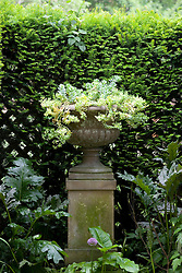 Euphobia in urn as focal point at the end of the pergola