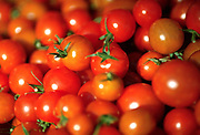 A large group of Cherry tomatoes on a table
