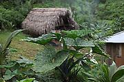 Panorama. Toledo Cacao Growers' Association (TCGA), San Antonio, Toledo, Belize. January 25, 2013.