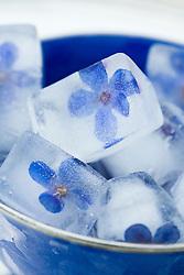 Flower ice cubes in a blue bowl - Anchusa azurea 'Dropmore'