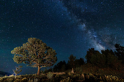Trees and Milky Way, Vermejo Park Ranch, New Mexico, USA.