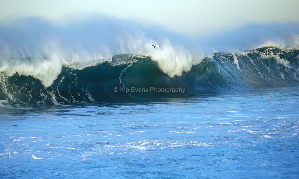 A lone gull flies near a crashing wave on Carmel Point
