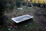 Water-filled bathtub in a north Somerset Christmas tree plantation.