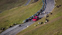 THEMENBILD - ein Auto inmitten einer Schaf Herde. Die Grossglockner Hochalpenstrasse verbindet die beiden Bundeslaender Salzburg und Kaernten mit einer Laenge von 48 Kilometer und ist als Erlebnisstrasse vorrangig von touristischer Bedeutung, aufgenommen am 06. August 2018 in Fusch an der Glocknerstrasse, Österreich // a car in the middle of a flock of sheep. The Grossglockner High Alpine Road connects the two provinces of Salzburg and Carinthia with a length of 48 km and is as an adventure road priority of tourist interest, Fusch an der Glocknerstrasse, Austria on 2018/08/06. EXPA Pictures © 2018, PhotoCredit: EXPA/ JFK