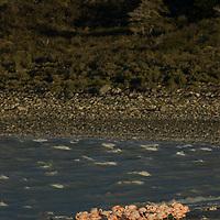 Flamingos sleep on a windy beach by Laguna Amarga, near Torres del Paine National Park.