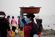 """Woman carrying a pot with mussels on her head at the open """"Mysterious Sea Road"""" in Hoedong shore (Jindo island). Jindo is the 3rd biggest island in South Korea located in the South-West end of the country and famous for the """"Mysterious Sea Route"""" or """"Moses Miracle"""". Every spring thousands flock to the shores of Jindo to walk the mysterious route that stretches roughly three kilometers from Hoedong to the distant island of Modo. Materializing from the rise and fall of the tides, the divide can reach as wide as forty meters."""