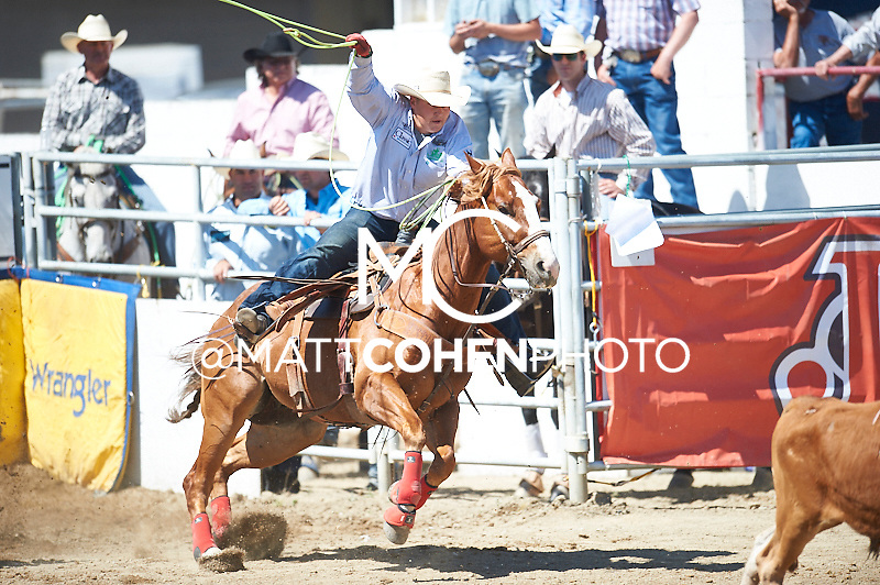 Team roper Levi Simpson of Ponoka, AB competes at the Redding Rodeo in Redding, CA.<br /> <br /> <br /> UNEDITED LOW-RES PREVIEW<br /> <br /> <br /> File shown may be an unedited low resolution version used as a proof only. All prints are 100% guaranteed for quality. Sizes 8x10+ come with a version for personal social media. I am currently not selling downloads for commercial/brand use.