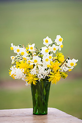 Arrangement of spring flowers in green glass vase. Narcissus 'Avalanche', N. 'Rip van Winkle' and Hyacinthus 'Multiflora White'