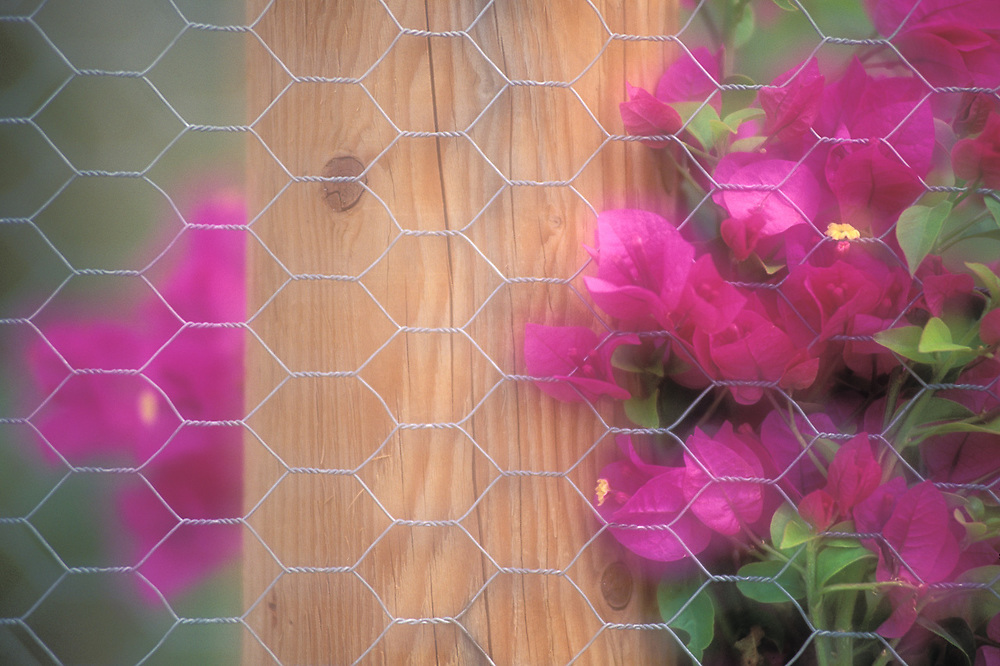 Private garden, spring, Borrego Springs, California, USA