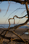 Sunrise over Folly Beach viewing the Morris Lighthouse through dirftwood near Charleston, SC. Morris Lighthouse dates back to 1767 but was rebuilt in the current form in 1873 after it was destroyed in the civil war.